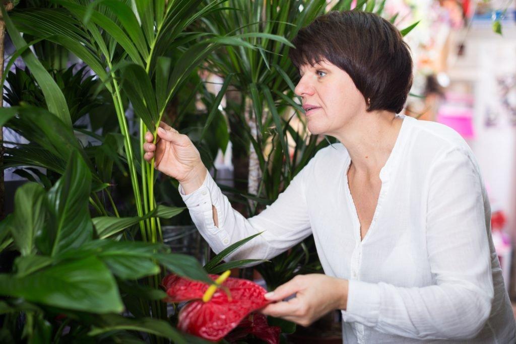 Pflanzenfreunden passiert häufig im Umgang mit Garten- und Zimmerpflanzen dieser Fehler