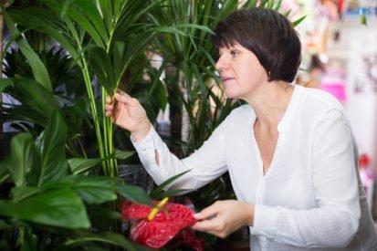 Studie: Zimmerpflanzen schützen uns vor Erkältung und Grippe