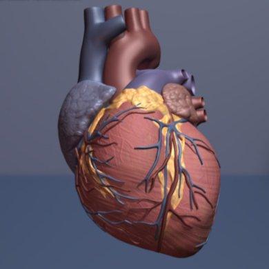 Sollten wir Bildschirm Menschen für unregelmäßigen Herzschlag?