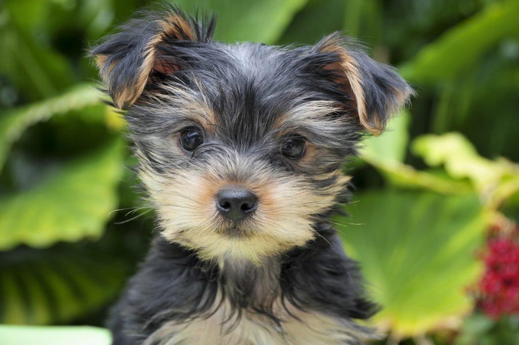 Tiernahrung: Weltweiter Hundefutter Rückruf – erste Hunde-Todesofer bereits bekanntgegeben