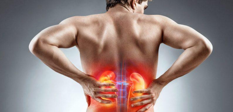 Rettet die Nieren – Wie ein lebenswichtiges Organ in Vergessenheit gerät