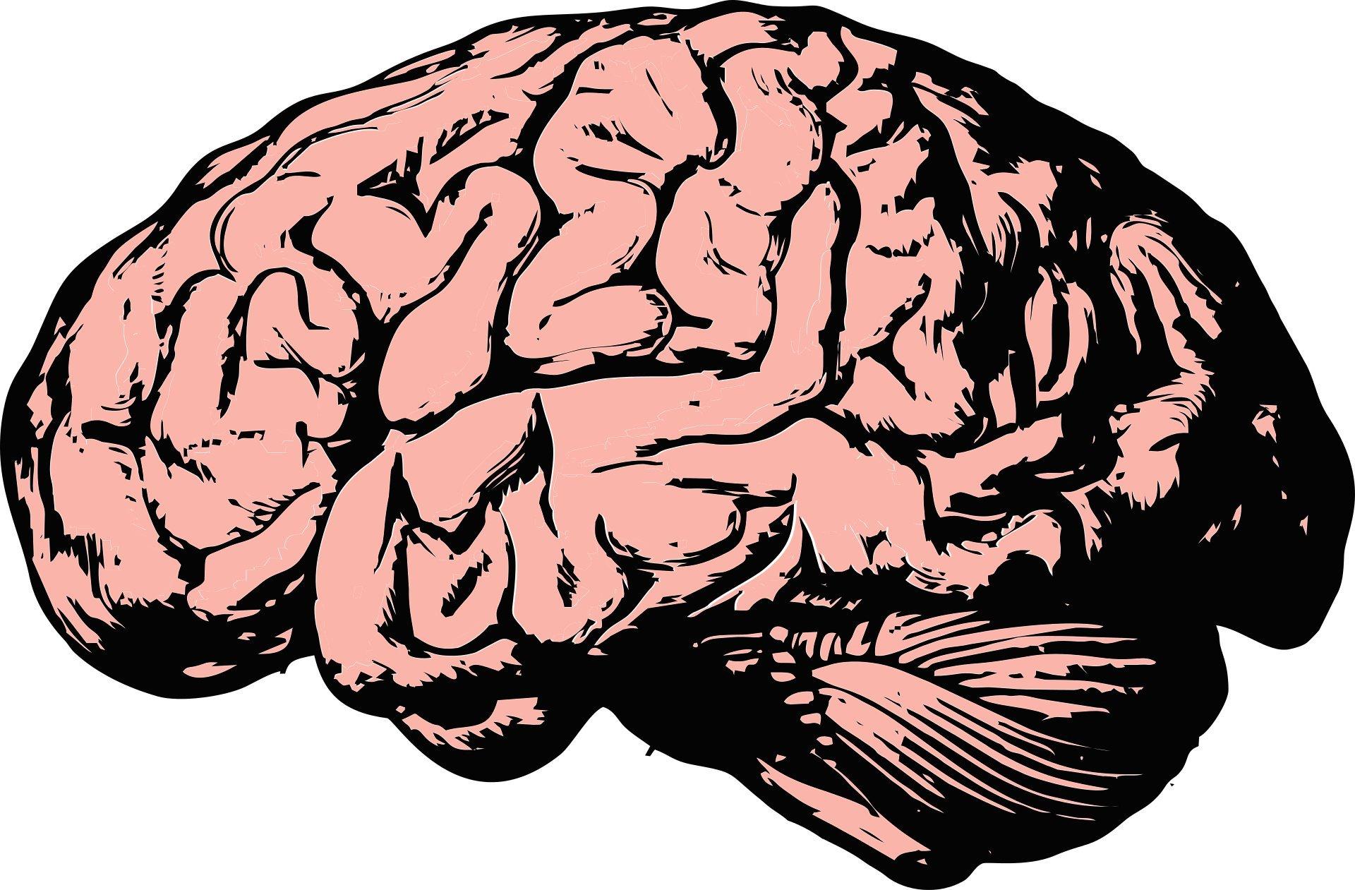 Körper-Gebäude-Ergänzung könnte schlecht für das Gehirn