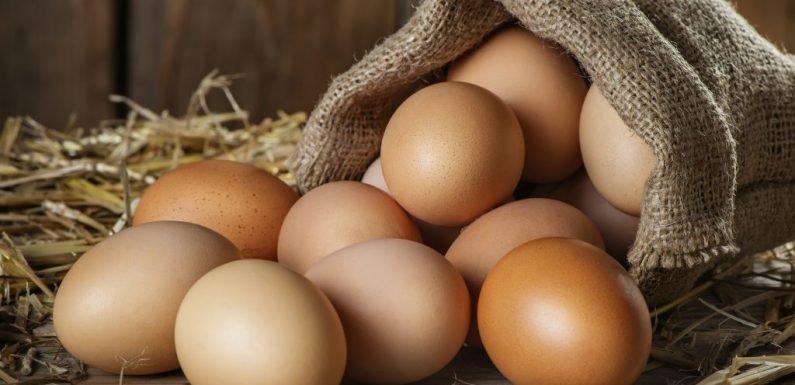 Sind Eier eher gesund oder doch ungesund? Diese Nährstoffe stecken im Ei