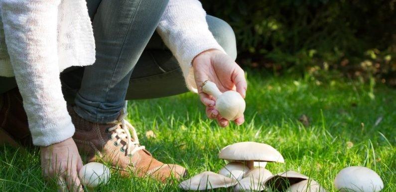 Erforscht: Durch Pilze essen unserem Gedächtnis auf die Sprünge helfen