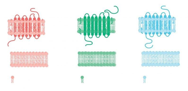 Lipid-gefüllten Partikel kann die Arbeit mit Immunsystem zu halten Fett gesund