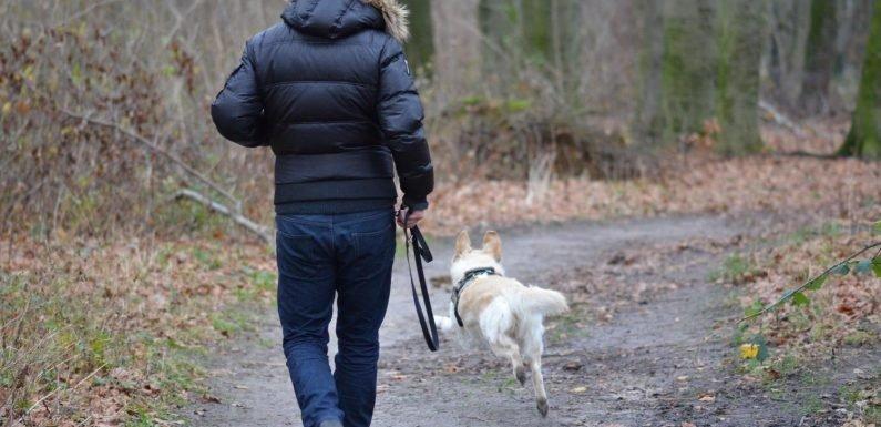 Hundebesitzer eher gerecht werden wöchentliche übung Ziele