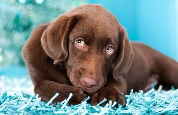 Hundefutter-Rückruf: Mehrere Tiere an Vergiftung gestorben