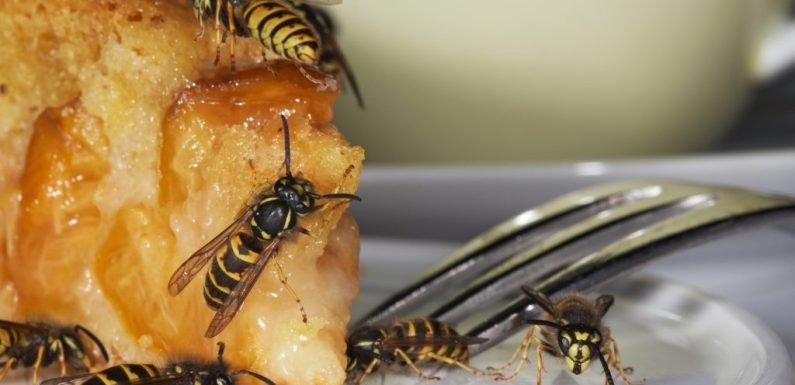 Gegen Wespenstiche: So könnt ihr Wespen vertreiben