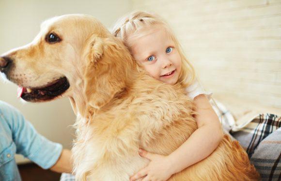 Hunde sind Überträger für neue und sehr gefährliche Viren
