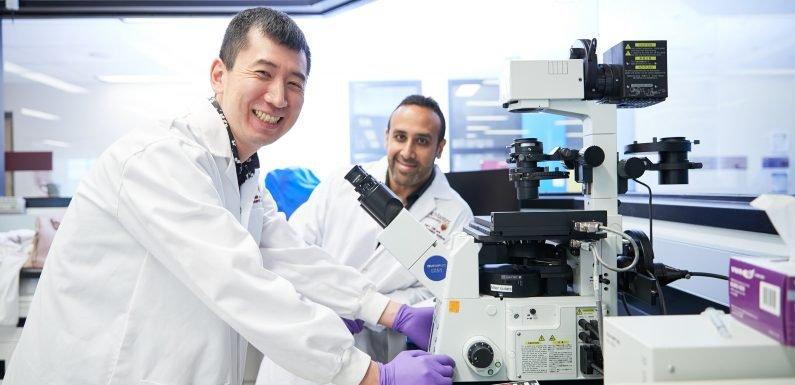Entdeckung der 'kingpin' Stammzellen können helfen, das Verständnis von Krebstumoren