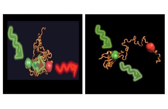 Wie molekulare escorts helfen, Krebs zu verhindern