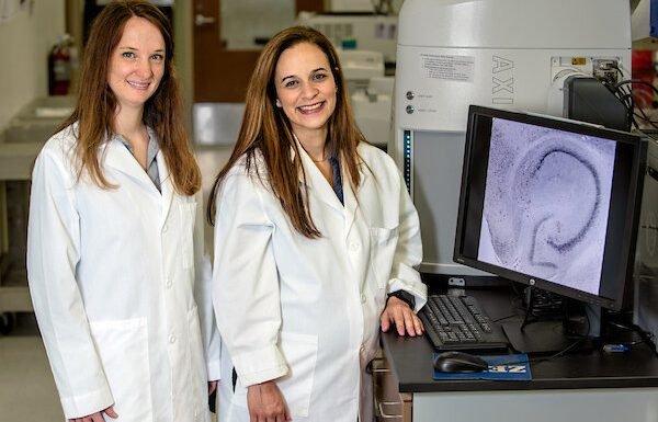 Early-life stress plus überexprimiert FKBP5-protein erhöht Angst Verhalten