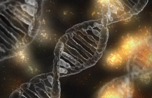 Genen in Verbindung mit dem Tod von sepsis bei Mäusen identifiziert