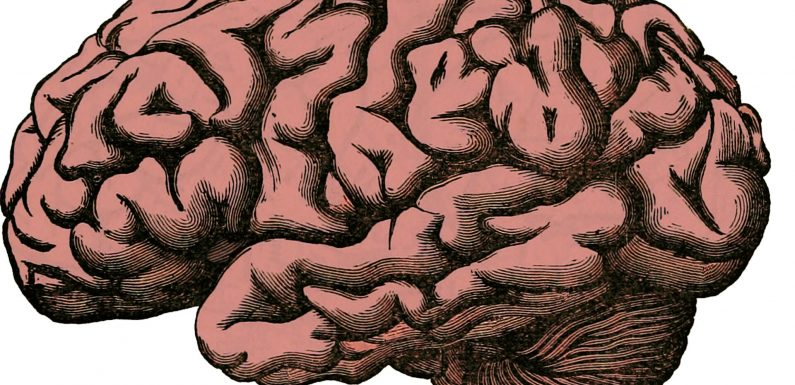 Bereich des Gehirns im Zusammenhang mit Raumwahrnehmung und-Planung spielt auch Rolle bei der Entscheidungsfindung