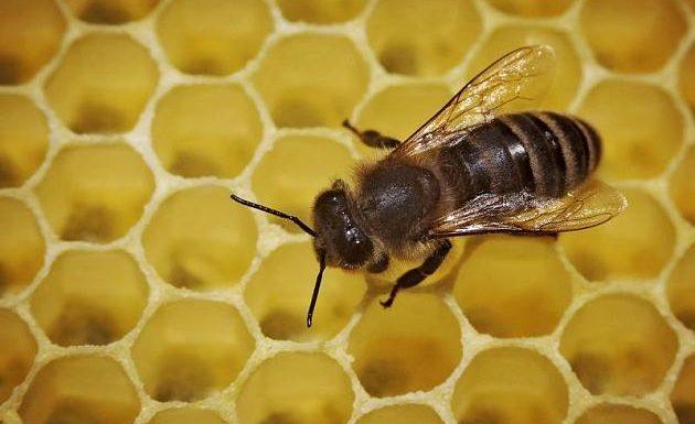 Von Biene gestochen: Das müssen Sie beachten