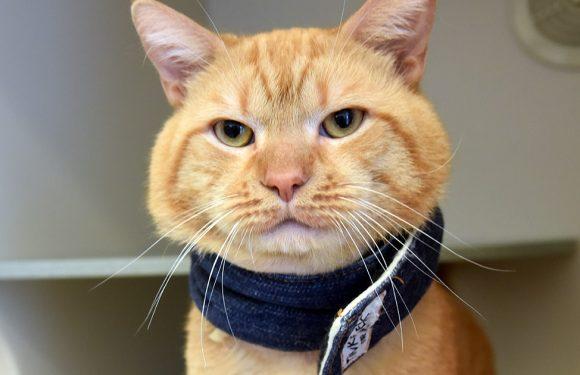 Tom Katze Verwandelt von Verletzten Streunenden Geliebten Haustier