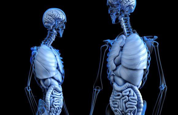 Fluorid beeinträchtigt Nieren-und Leberfunktion bei Jugendlichen, Studie legt nahe,