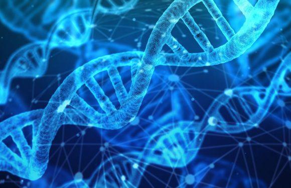 Neue Hinweise auf stem cell transplant Ablehnung zeigte sich in Studie