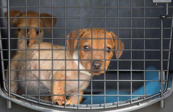 Trending Now: Online-Puppy Scams