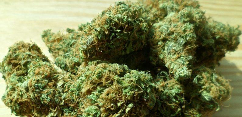 US-Preise $3M, um Lücken in der medizinischen Marihuana-Forschung