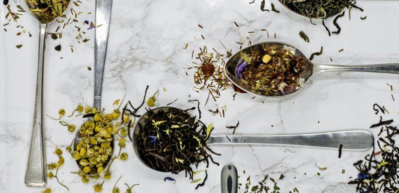 Wirkstoff aus grünem Tee macht Bakterien empfindlicher für Antibiotika