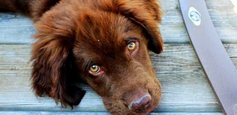 Was Mein Tierarzt Möchte Sie Wussten Zu Holen! Pet Care