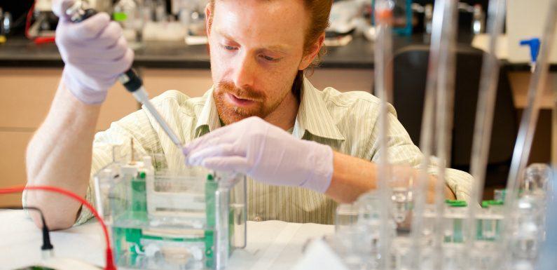 Taubheit verursachenden protein-Mangel lässt Gehirn von rewire selbst, schlägt Forschung vor