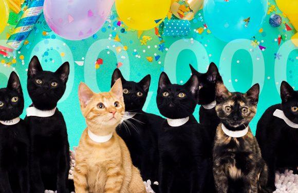 Kleine Kätzchen Erreicht Großen Meilenstein als ASPCA 500.000 th Spay/Neutrum Chirurgie in New York City
