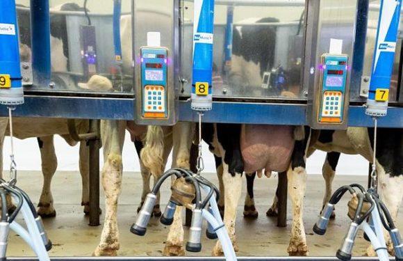 Niemand ist gestorben: Bauer stinksauer über Reaktionen auf Milch-Rückruf