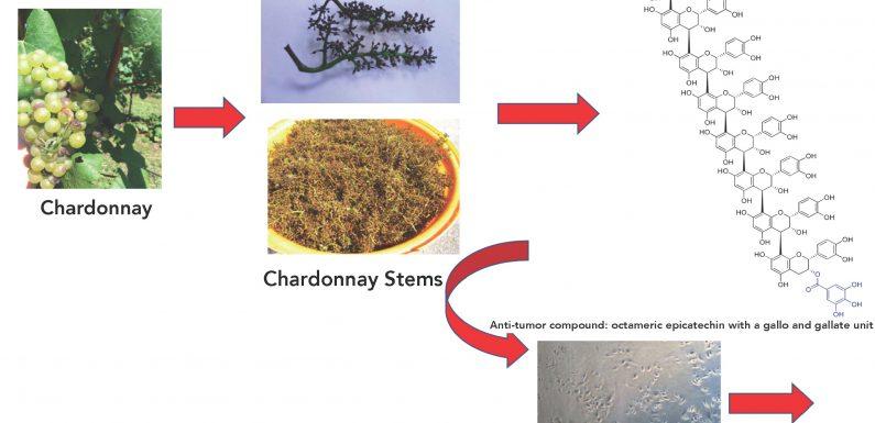 Vergessen Sie den Chardonnay, gib mir den traubenstielen: Anti-tumor-Aktivität in der Prostata-Krebs-Zellen