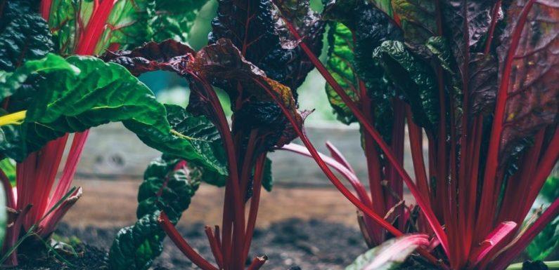 Hier Sind die Erstaunliche Vorteile Erhalten Sie Vom Essen Rüben!