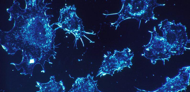 Zirkuläre RNA Grenzen Haut-Krebs-Ausbreitung