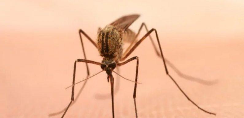 2010 bis 2017 sah, > 5,000 Reisen-verbunden mit dengue-virus-Fälle in den USA