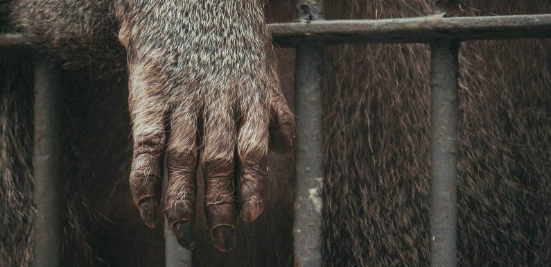 Spillover: Warum Keime springen Arten von Tieren auf Menschen
