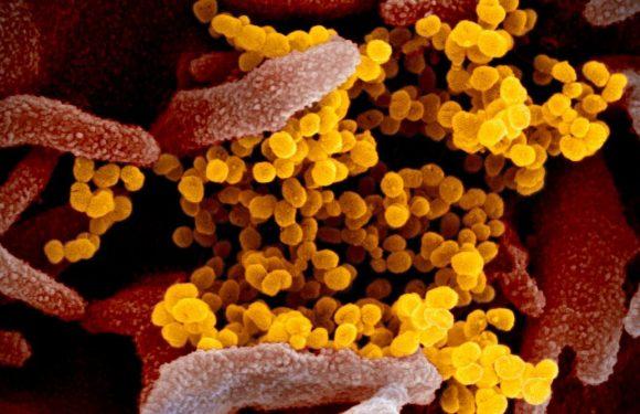 Die Benennung des neuen coronavirus: Warum die Einnahme von Wuhan aus dem Bild Fragen