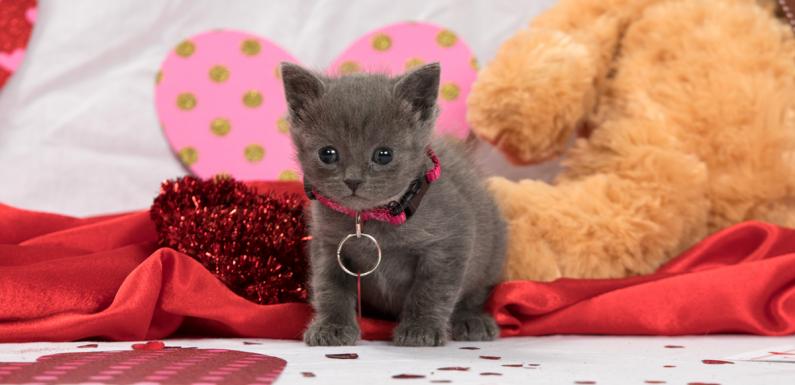 Shop Mit dem Herzen – Valentinstag-Shopping-Liste