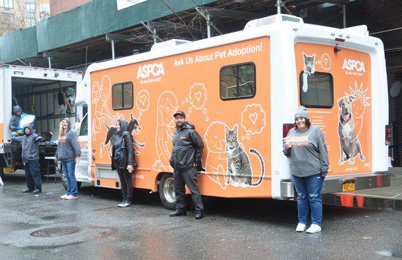 ASPCA Coronavirus Hilfsmaßnahmen Beginnen in New York City Gemeinden