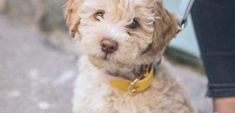 Coronavirus Pet Care Informationen Zu Holen! Pet Care