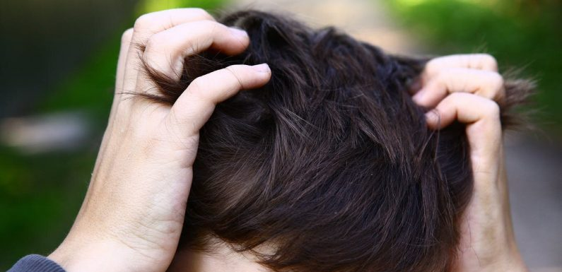 Falsche COVID-19 'Kuren' im überfluss da mehrere Medikamente getestet werden, einschließlich Kopfläuse Medikament Ivermectin