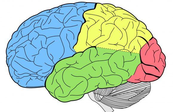 """""""Wissen, wie' ist in Ihrem Gehirn"""