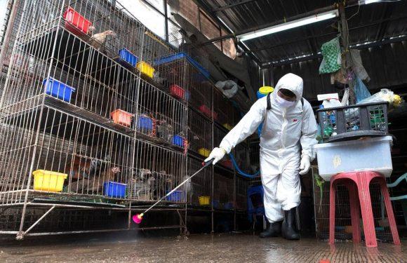 Könnte der Chatuchak-Markt in Bangkok das nächste Pandemie-Epizentrum werden?