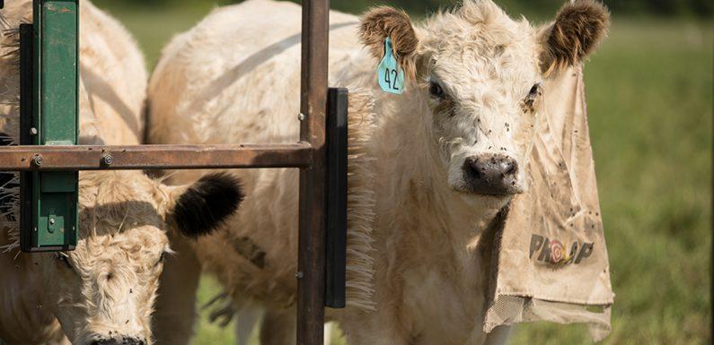 Lebensmittel-Unternehmen zu Helfen, Tiere auf dem Bauernhof und Frontline-Mitarbeiter,