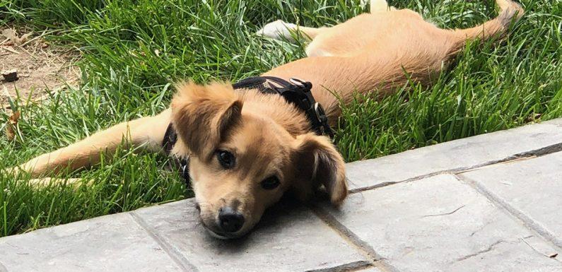 Ein Hund Angenommen Hält Ihrem Vater die Erinnerung Lebendig