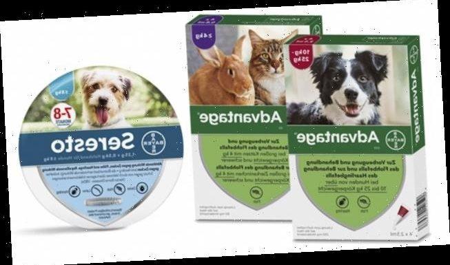 Vorbeugender Flohschutz für Haustiere aus der Apotheke