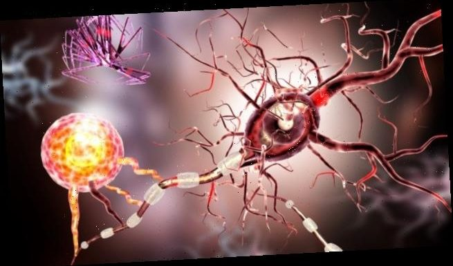 Ofatumumab: erster B-Zell-Antikörper zur Eigenapplikation bei Multipler Sklerose